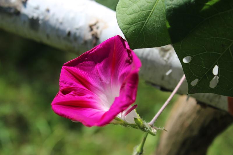 Up close with a tree and leaf. Photo: Jamie L. Manser JamieManser.com