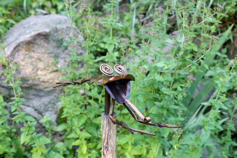 Leapin' lickin' frogs! Photo: Jamie L. Manser JamieManser.com