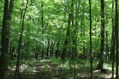 More woods! Photo: Jamie L. Manser
