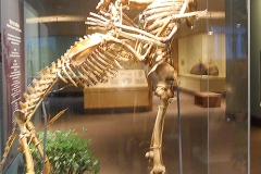 Oh, Osteology! Grover Krantz, who was Dan's Physical Anthropology Professor at Washington State, donated his bones to the Smithsonian National Museum of Natural History.